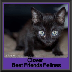 2017 - Adopted - Clover