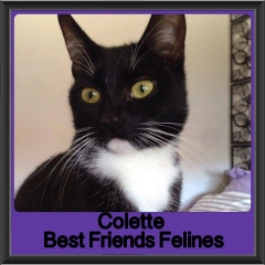 2017 - Adopted - Colette