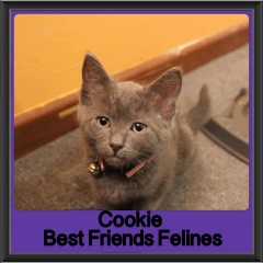 2017 - Adopted - Cookie