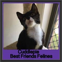 2017 - Adopted - Cuddlepie