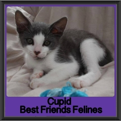 2017 - Adopted - Cupid