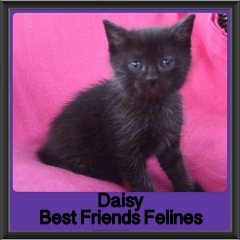 2017 - Adopted - Daisy