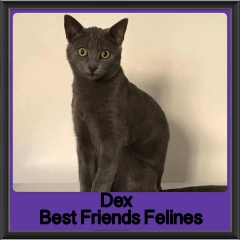 2017 - Adopted - Dex