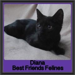 2017 - Adopted - Diana