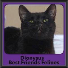 2017 - Adopted - Dionysus
