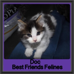 2017 - Adopted - Doc