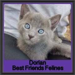 2017 - Adopted - Dorian