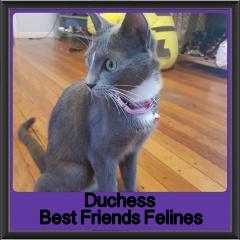 2017 - Adopted - Duchess