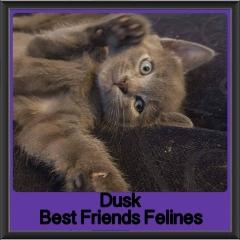 2017 - Adopted - Dusk