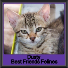 2017 - Adopted - Dusty