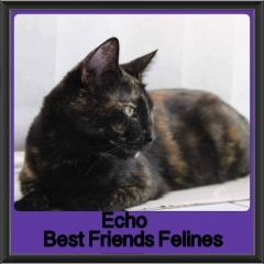 2017 - Adopted - Echo