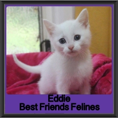 2017 - Adopted - Eddie