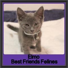2017 - Adopted - Elmo
