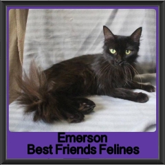 2017 - Adopted - Emerson