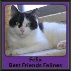 2017 - Adopted - Felix