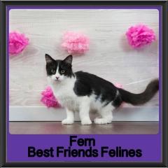 2017 - Adopted - Fern