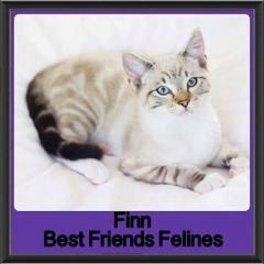2017 - Adopted - Finn