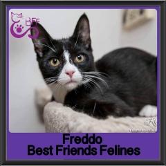 2017 - Adopted - Freddo