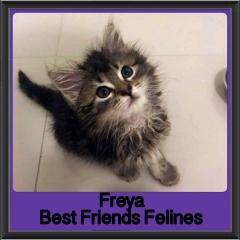 2017 - Adopted - Freya