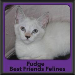 2017 - Adopted - Fudge