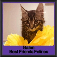 2017 - Adopted - Galen