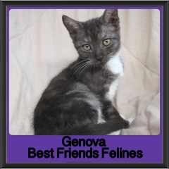 2017 - Adopted - Genova