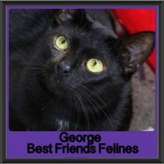 2017 - Adopted - George