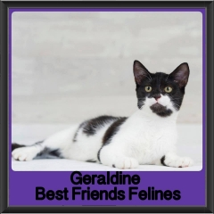 2017 - Adopted - Geraldine