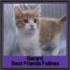 2017 - Adopted - Gerard