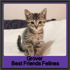 2017 - Adopted - Grover