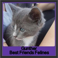 2017 - Adopted - Gunther