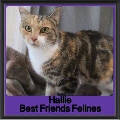 2017 - Adopted - Hallie