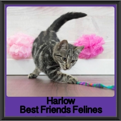 2017 - Adopted - Harlow