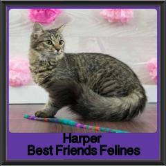 2017 - Adopted - Harper