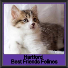 2017 - Adopted - Hartford