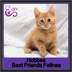 2017 - Adopted - Hobbes