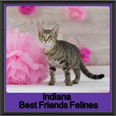 2017 - Adopted - Indiana