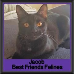 2017 - Adopted - Jacob