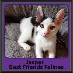 2017 - Adopted - Jasper