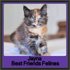 2017 - Adopted - Jayna