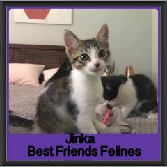 2017 - Adopted - Jinka