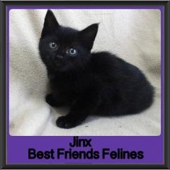 2017 - Adopted - Jinx
