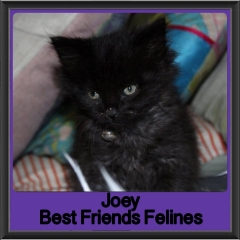 2017 - Adopted - Joey