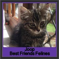 2017 - Adopted - Joop