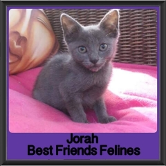 2017 - Adopted - Jorah