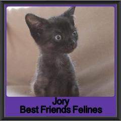 2017 - Adopted - Jory