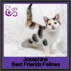 2017 - Adopted - Josephine