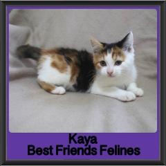 2017 - Adopted - Kaya