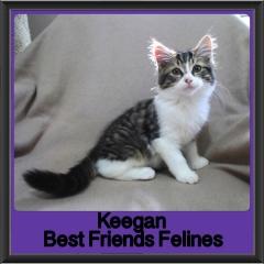 2017 - Adopted - Keegan