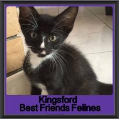 2017 - Adopted - Kingsford